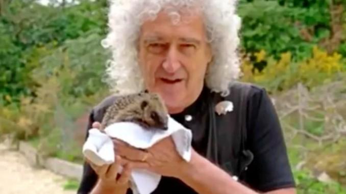 """Brian May (Queen) aiuta a salvare migliaia di piccoli ricci: """"E' una grossa gioia!"""""""